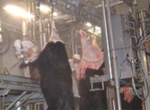 牛解体室(ダーティーゾーン)